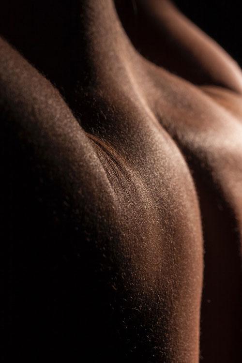 muscles du dos