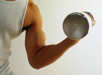 Muscles des Avant-Bras