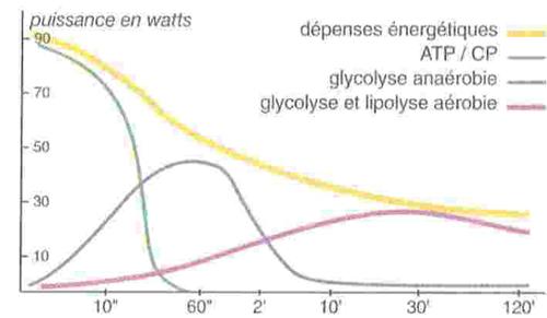 Entretien de sa forme et filières énergétiques ATP