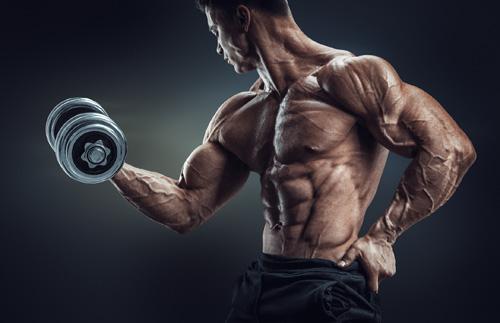 ossature bodybuilding